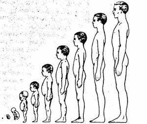 Каким должен быть размер полового органа в 14 лет